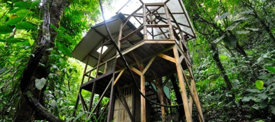 FINCA BELLAVISTA TREEHOUSE COMMUNITY | COSTA RICA