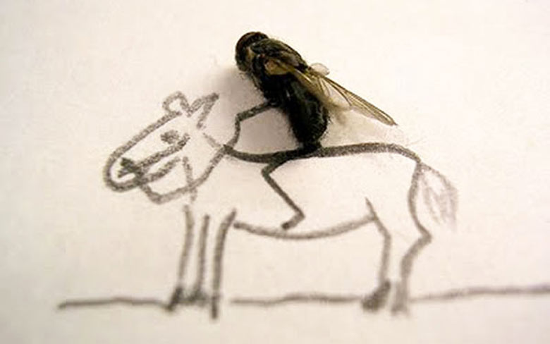 Flychelangelo Dead Flies Art on a horse