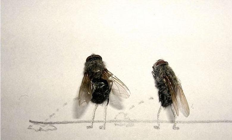 Flychelangelo Dead Flies Art peeing