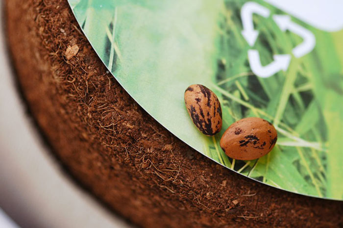 Tree seeds that come with the Bios Urn A Biodegradable and eco-friendly Urn