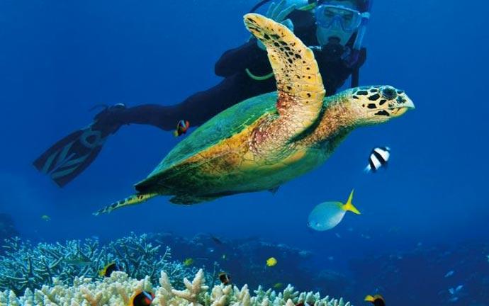 Underwater life around Vamizi Island