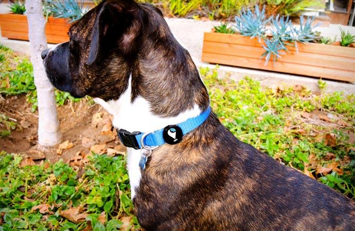 GPS tracker on a dog