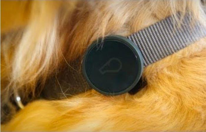 Dog GPS