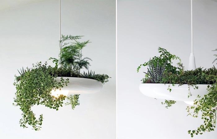 Babylon light plant garden