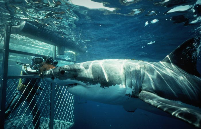 Shark diving in South Africa
