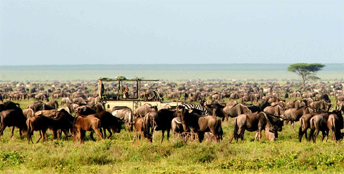 Nomad Safari wild life game tours