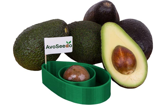 AvoSeedo and fully grown avocados