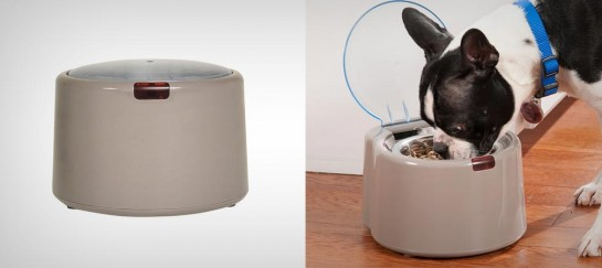 WONDERBOWL SELECTIVE PET FEEDER