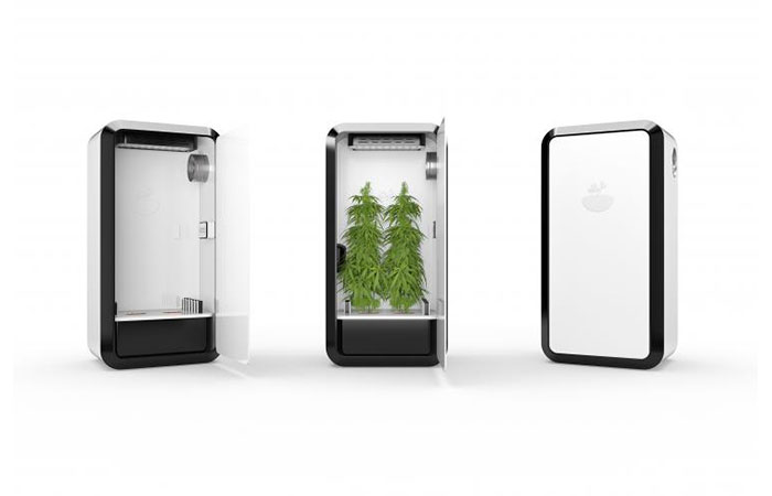 Leaf Cannabis Growing System