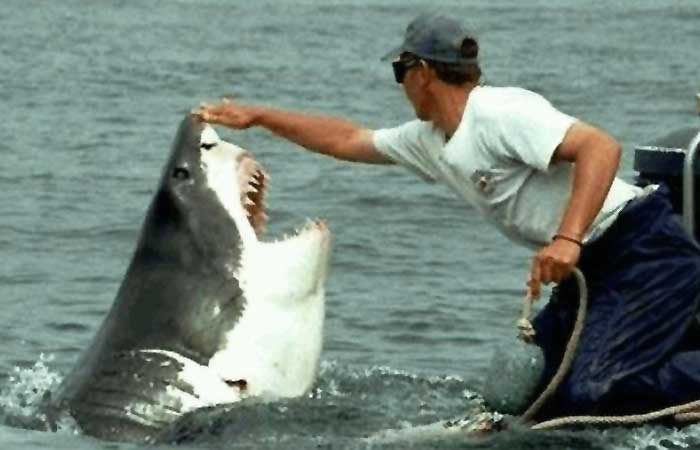 Man petting a shark