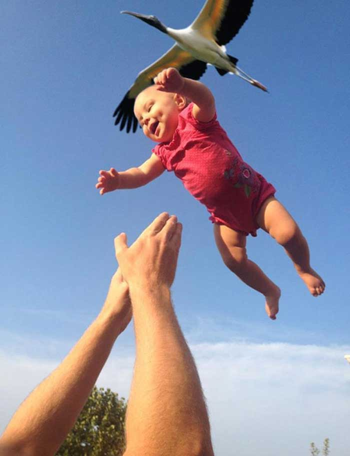 Baby falling into father's hands and a stork flying above