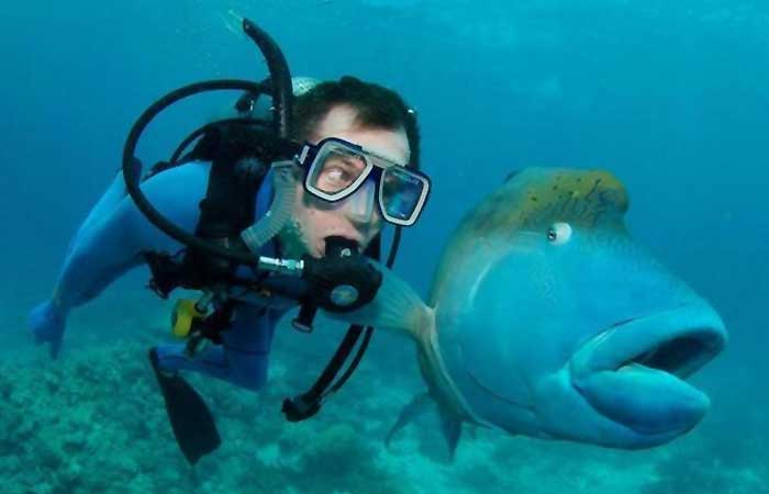A fish next to a diver
