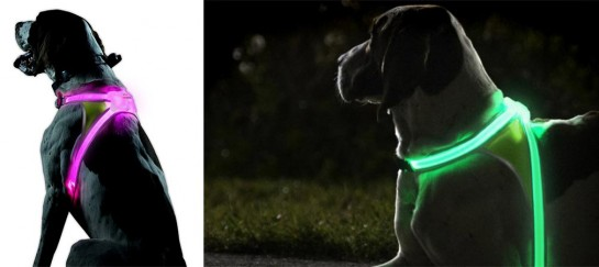 Noxgear LightHound | LED Dog Vests