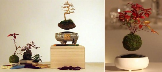Air Bonsai | Floating Bonsai Trees