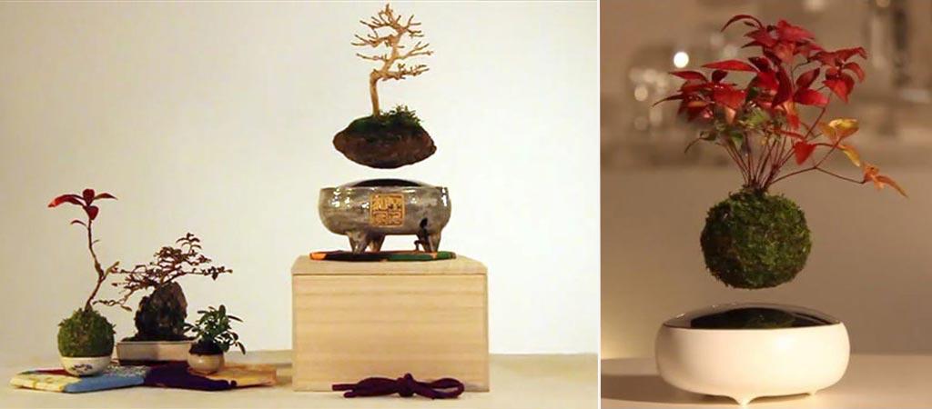 Air Bonsai Lets You Make Your Own Floating Tree Bonsai Tree