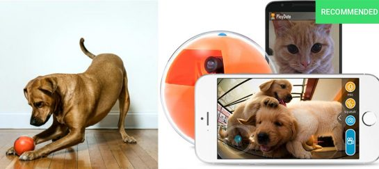 Playdate | World's First Interactive Pet Camera