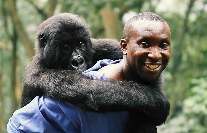 Virunga Gorilla Exploration