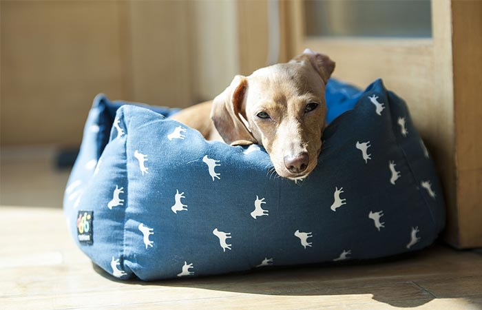 Dog In A Dog Bed