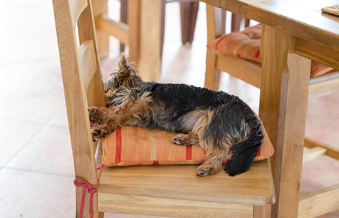 Dog Sleeping On A Chair