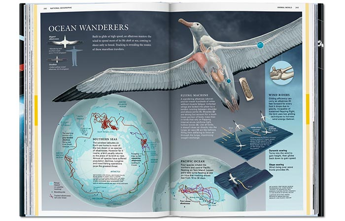 National Geographic Infographics page about bird migration