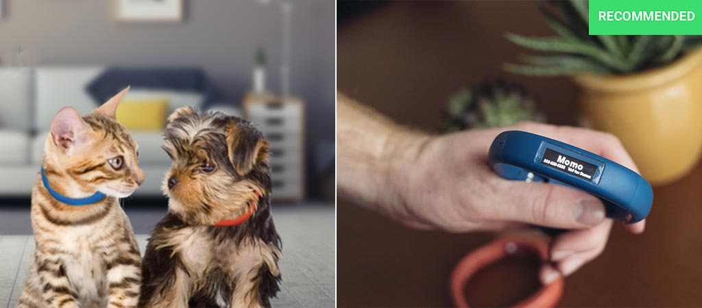 A picture of a dog and a cat wearing the Scollar Mini and a picture of a man holding both pairs