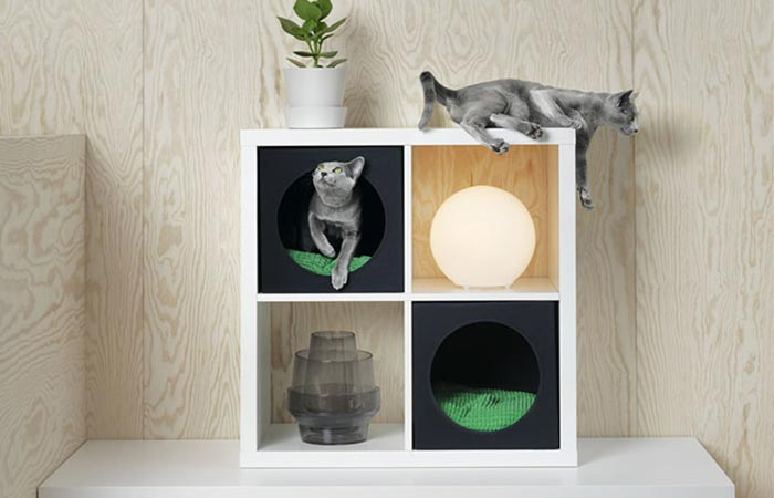 cats playing in Ikea boxes