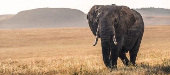 How to Choose which Animal Conservation Organizations to Support: 4 things to look for